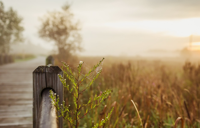 Фото обои природа, забор, паутина