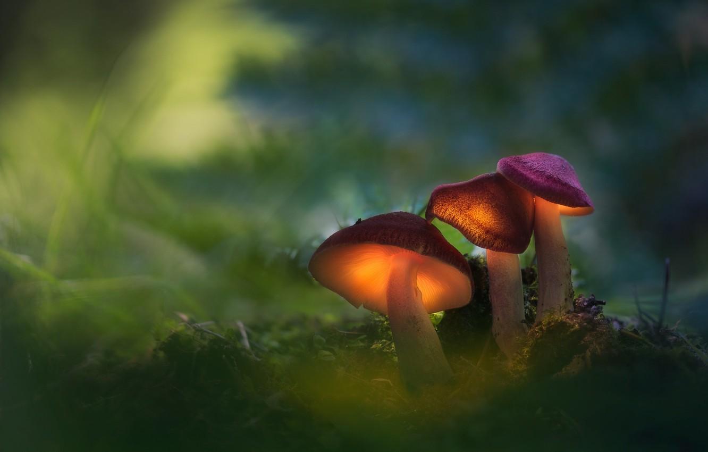 Фото обои лес, макро, свет, грибы, семья