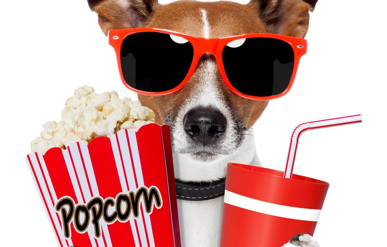 Фото обои собака, очки, напиток, попкорн