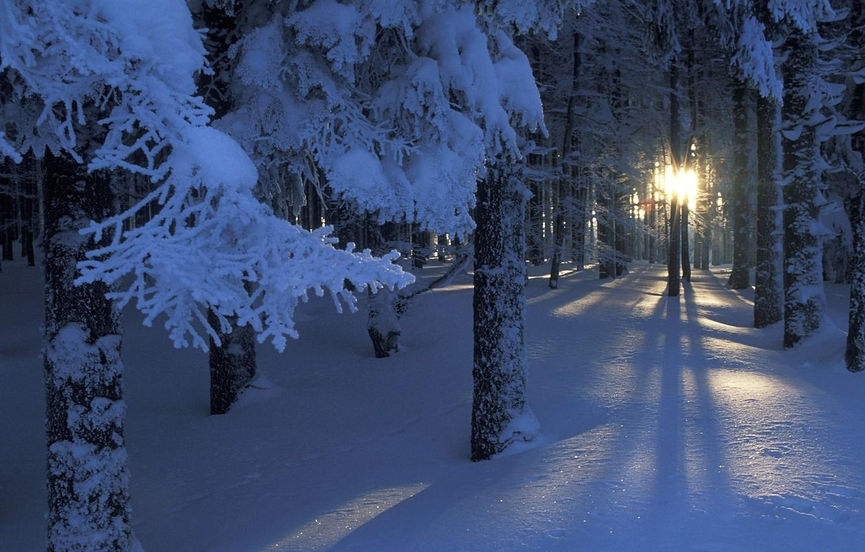 Фото обои лес, солнце, свет, снег, деревья, ветки, сияние, Зима
