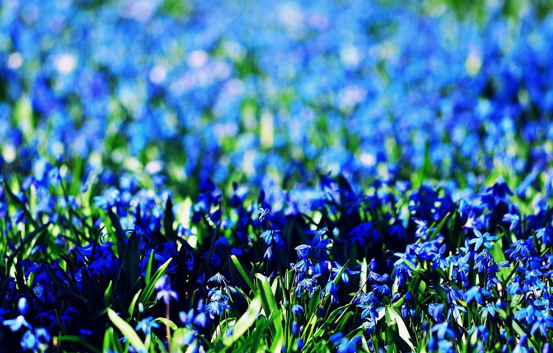 Обои синие, цветы. Цветы foto 16