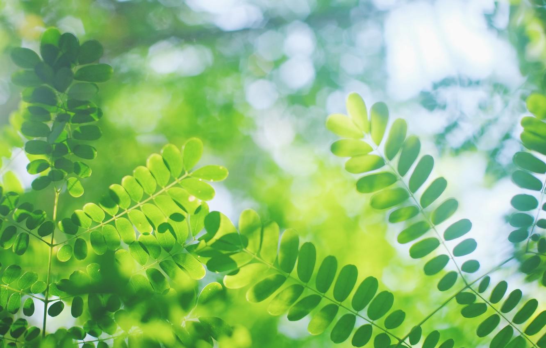 Фото обои листья, макро, блики, размытость, зелёные, Веточки