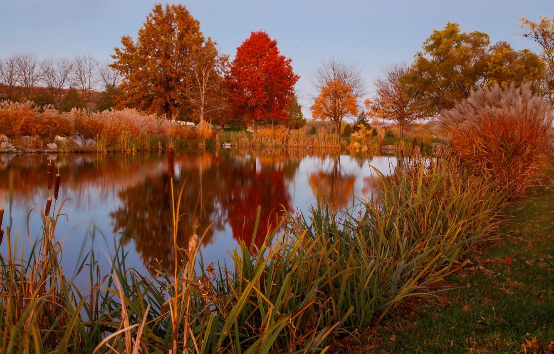 осень на пруду картинки этом