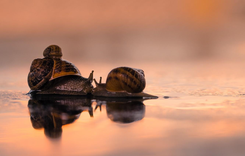 Фото обои love, kiss, family, snails