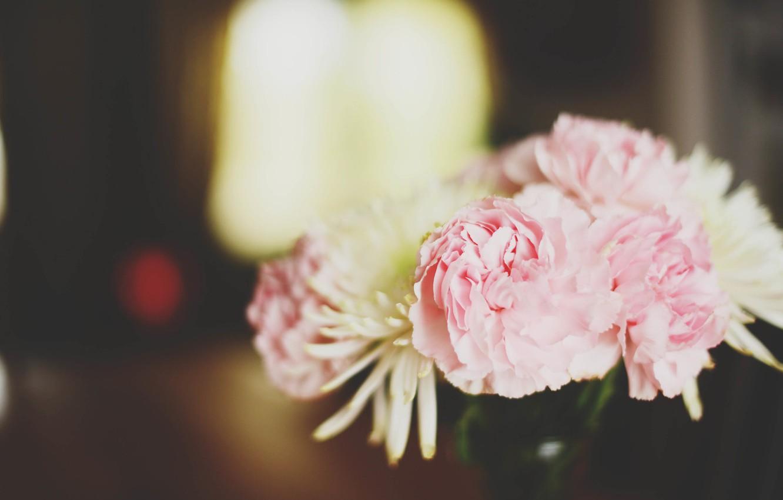 Фото обои цветы, пионы, астры
