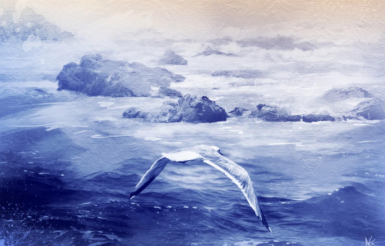 Фото обои море, камни, птица, текстура, чайка
