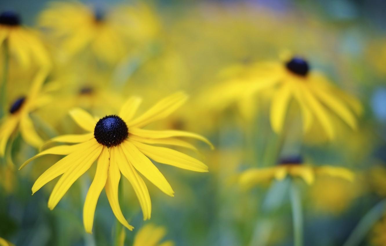 Фото обои цветок, цветы, природа, жёлтый, растения