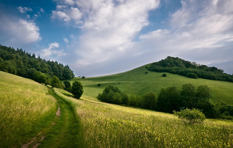 Фото обои поле, деревья, пейзаж, природа, холмы