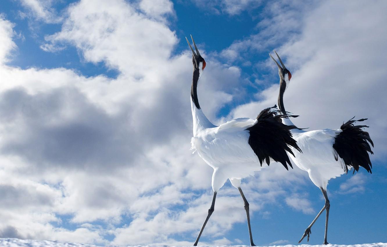 Фото обои птицы, ноги, клюв, шея, длиные
