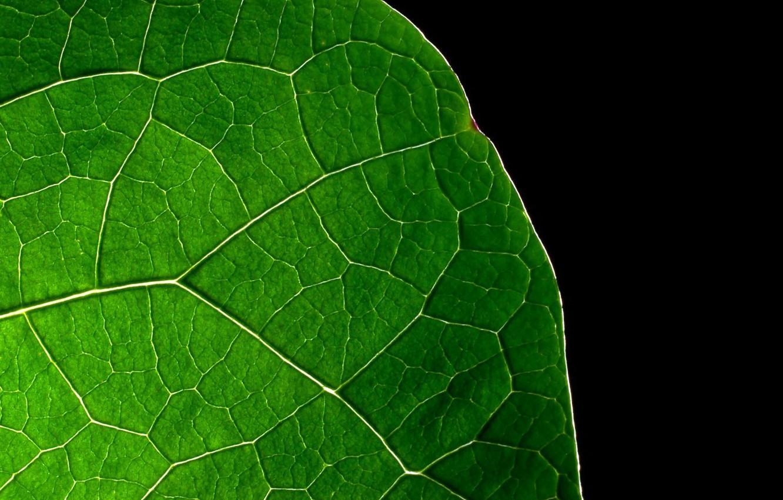 Фото обои лист, Зелёный, чёрный фон