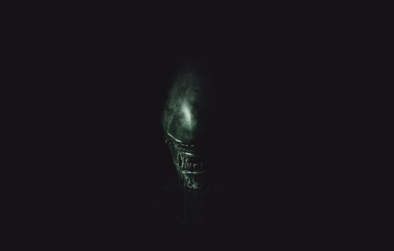 Фото обои green, wallpaper, horror, black, exoskeleton, monster, alien, Alien, science fiction, predator, sci-fi, movie, fang, killer, …