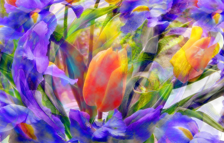 Обои луг, цветы. Абстракции foto 12