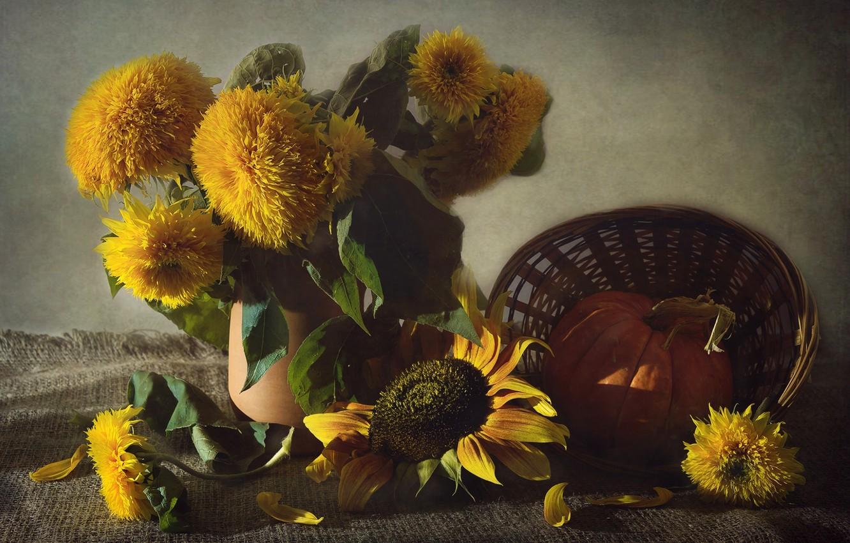 Фото обои подсолнухи, желтый, текстура, тыква