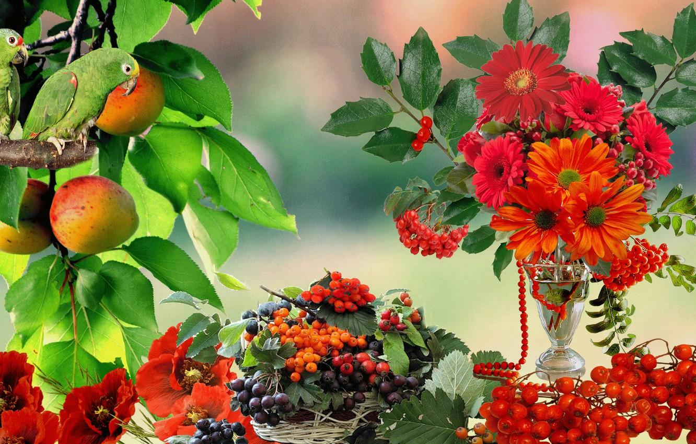 Фото обои цветы, ягоды, Попугай, натюрморт, рябина