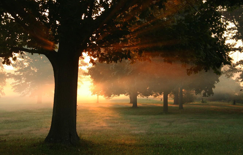 Фото обои осень, лес, трава, листья, солнце, лучи, свет, деревья