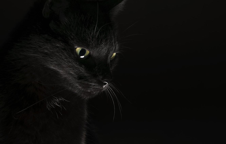 нас выгодные картинки на рабочий стол кошки черные злая интерактивной карте тольятти