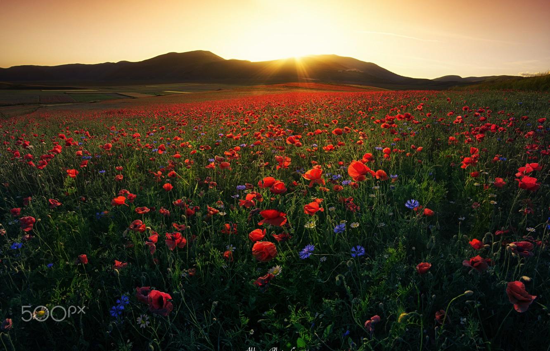 Фото обои поле, небо, солнце, свет, цветы, маки