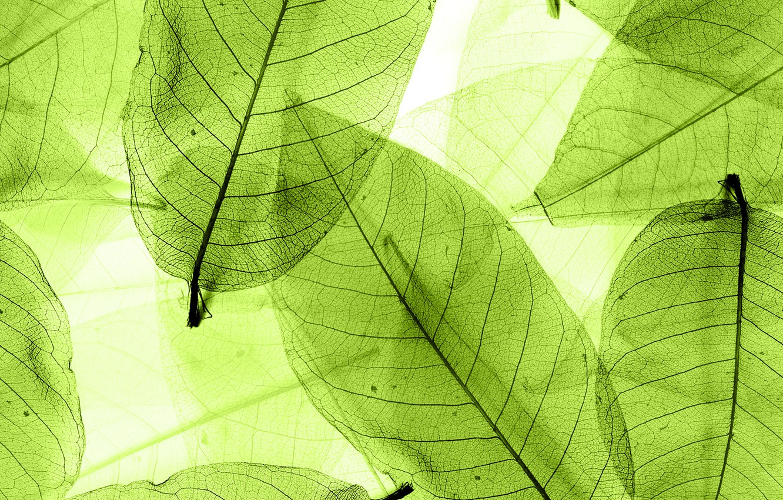 Фото обои листья, green, abstract, leaves, macro, transparent