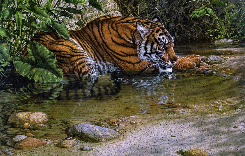 Фото обои jungle, tiger, cat, painting, Lee Kromschroeder, thirsty, stream, beast of prey, Tiger River