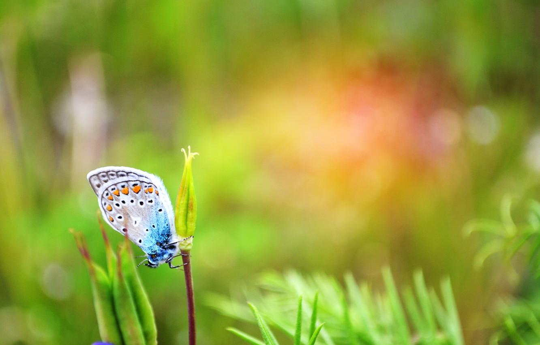 Фото обои зелень, лето, трава, бабочка, день