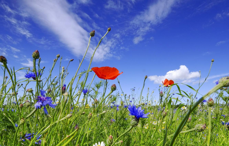 менее картинки красивая природа цветы небо только тренажерный зал