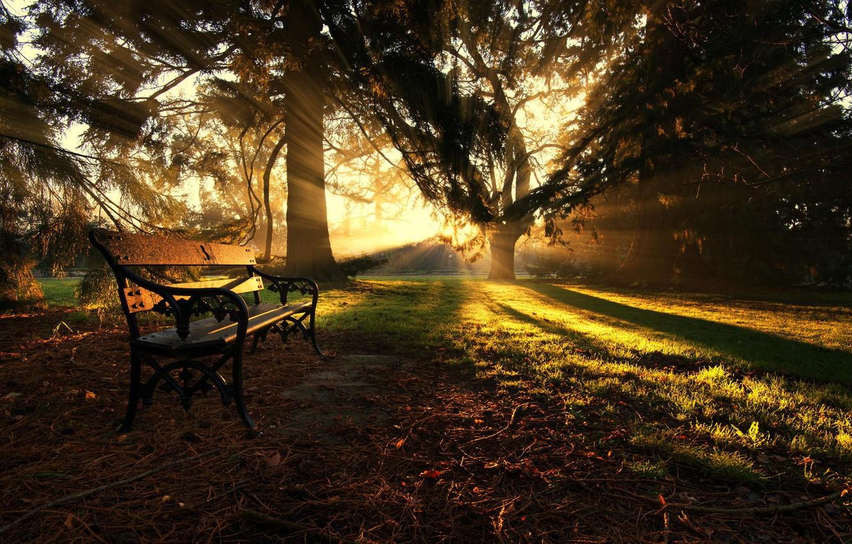 Фото обои лучи, свет, деревья, парк, Осень, лавка