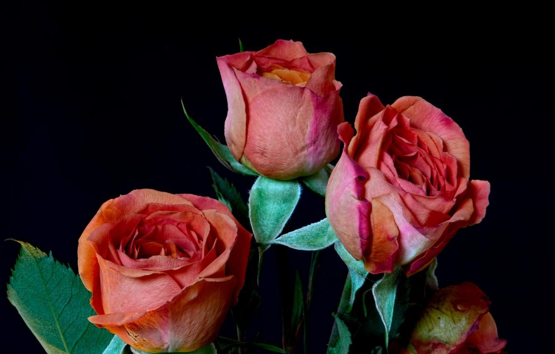 Фото обои фон, розы, букет, лепестки, бутон