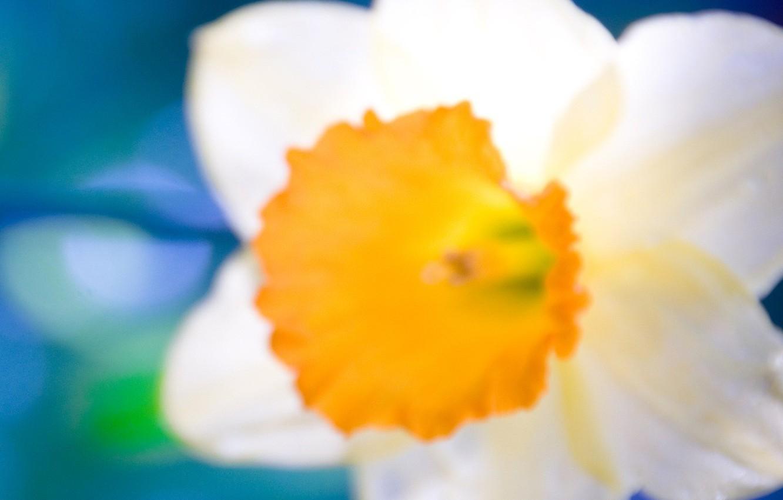 Фото обои белый, оранжевый, крупный план