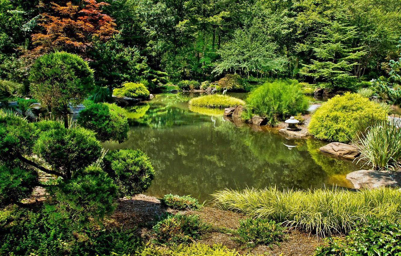 Обои цветы, сша, кусты, ball ground gibbs gardens. Природа foto 7