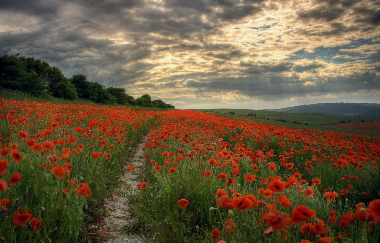 Фото обои поле, небо, лучи, цветы, тучи, маки, Вечер, тропинка, просвет
