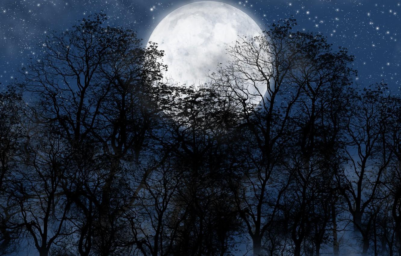 Фото обои лес, ночь, луна, звезды.небо