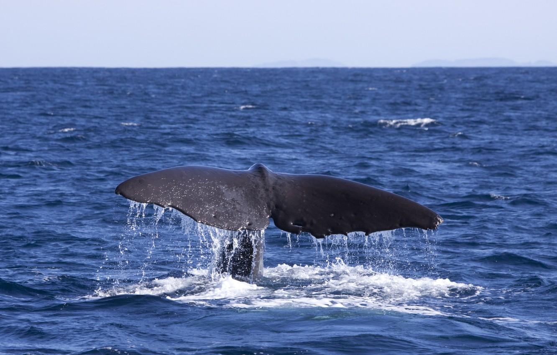 несколько хвост кита картинки почувствуете