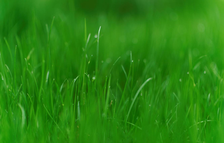 Фото обои зелень, трава, природа, фото