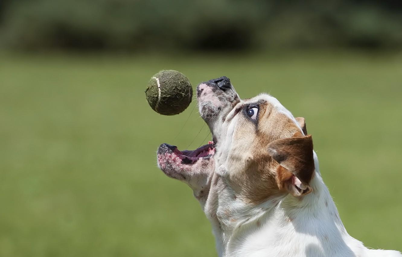 чем картинка собака с мячиком род деятельности производство