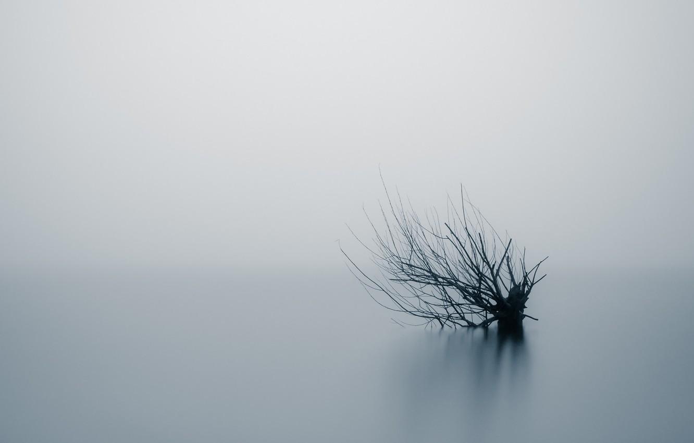 Фото обои природа, туман, дерево