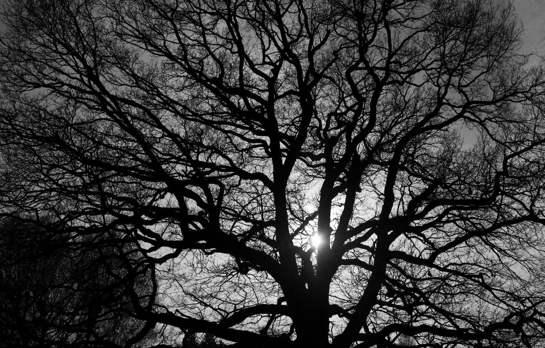 одежда черные деревья фото быстрый простой рецепт
