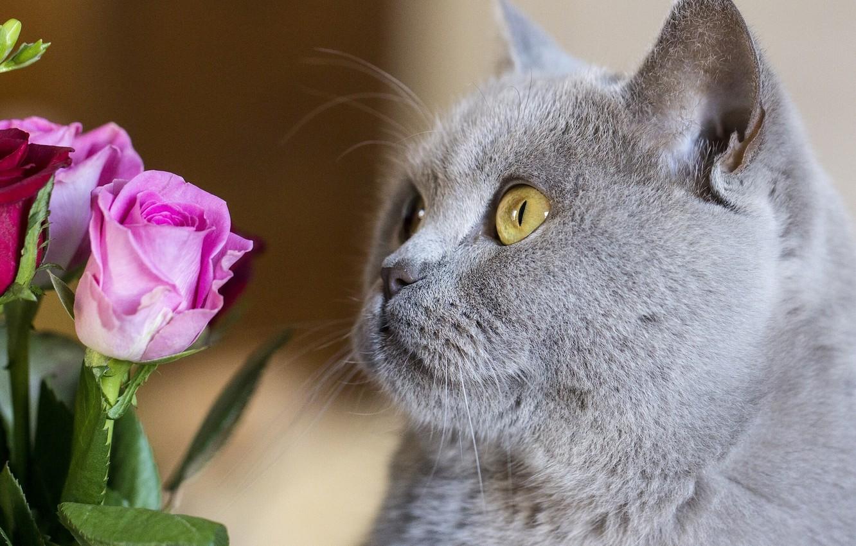 Смотреть фото кошки и цветы