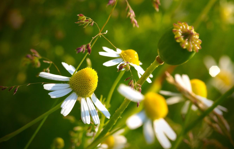 Фото обои цветок, желтый, макросъемка