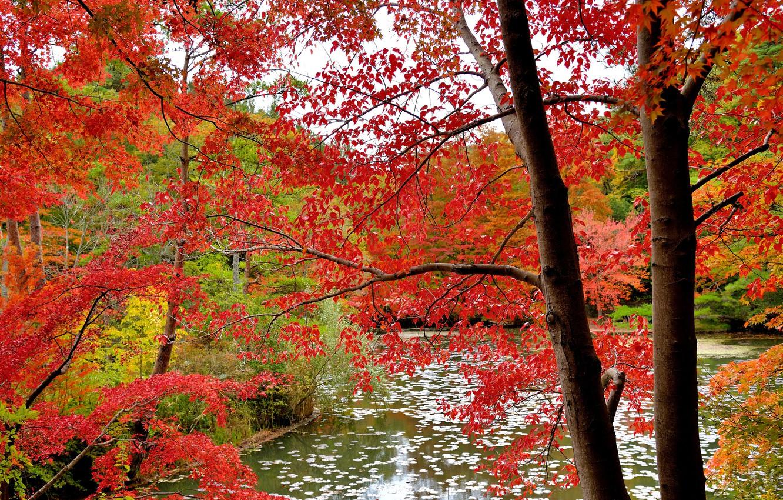 Фото обои осень, лес, листья, вода, деревья, багрянец