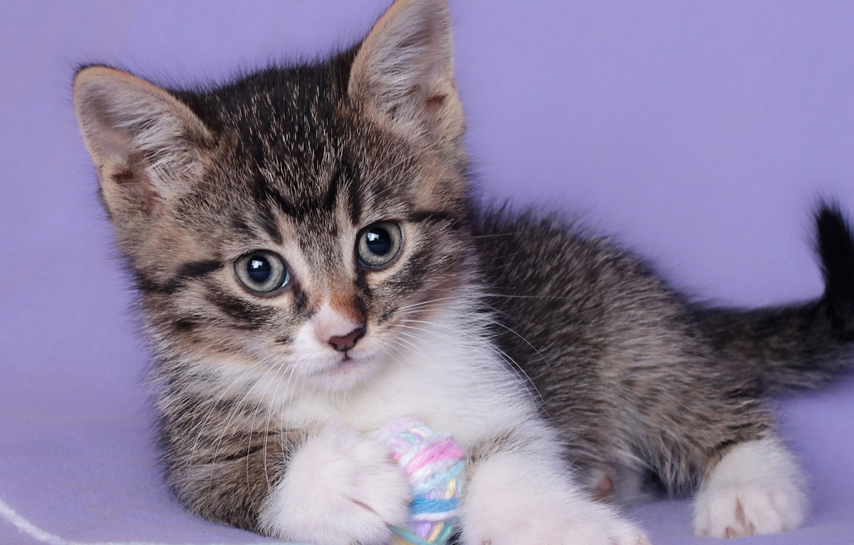 Фото обои взгляд, клубок, малыш, котёнок