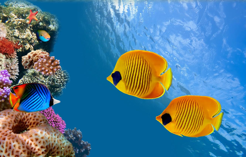 Фото обои океан, рыба, Таиланд, Thailand, под водой, underwater, ocean, риф, fish, reef, колонии кораллов, coral colony, …