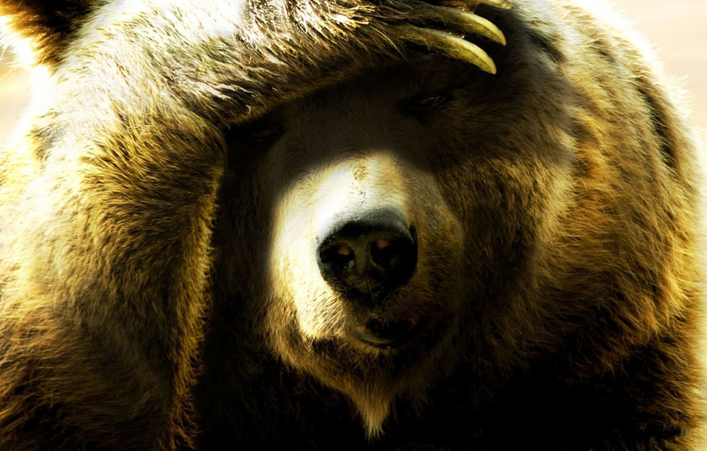 картинки компьютерные морды медведя
