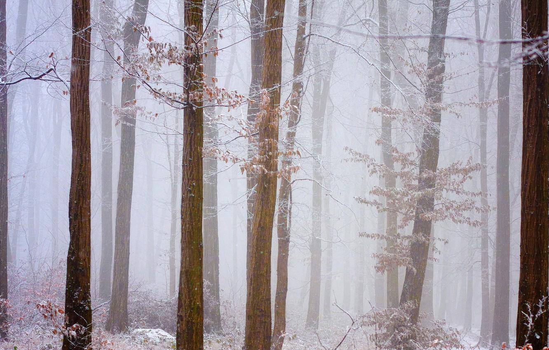 Фото обои зима, иней, лес, снег