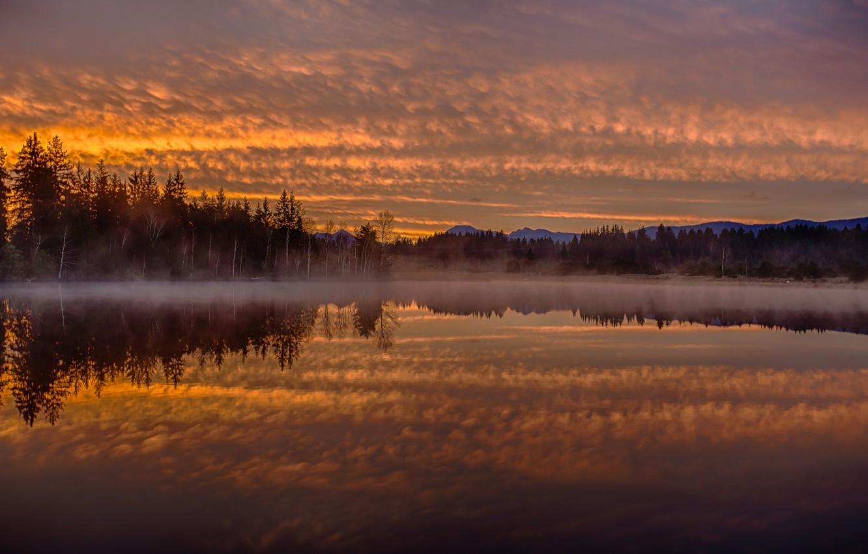 Фото обои лес, туман, отражение, рассвет, утро, Германия, Бавария, Germany, Bavaria, Lake Kirchsee, озеро Кирхзее