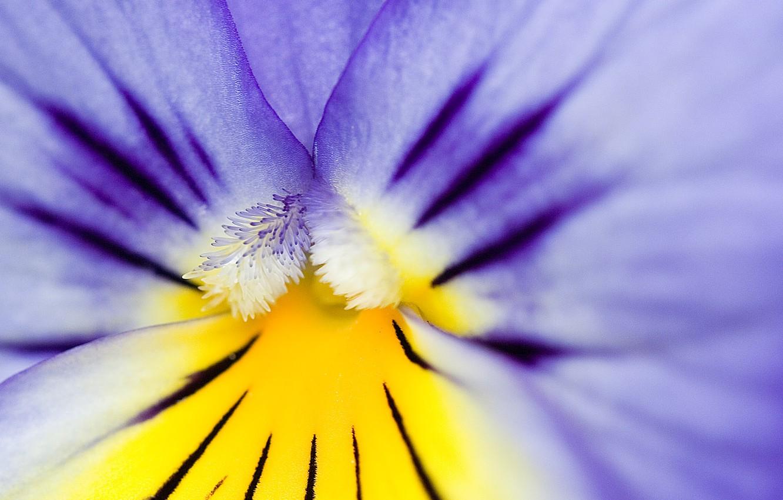 Фото обои фиолетовый, пыльца, КУА