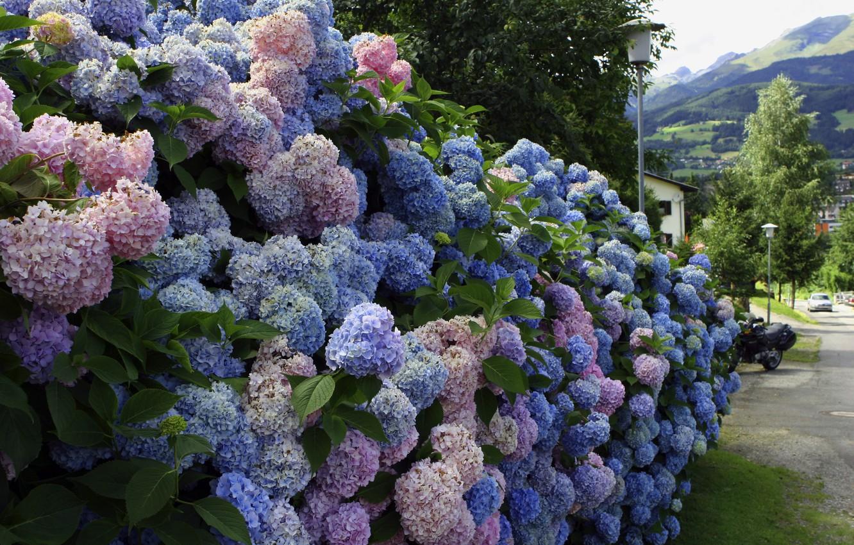 Обои забор, улица, цветы. Города foto 13