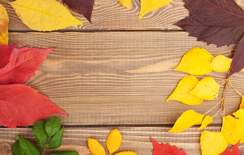 Фото обои дерево, colorful, wood, texture, autumn, leaves, осенние листья