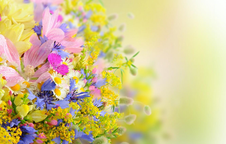 Фото обои лето, цветы, букет, daisies, drops, petals