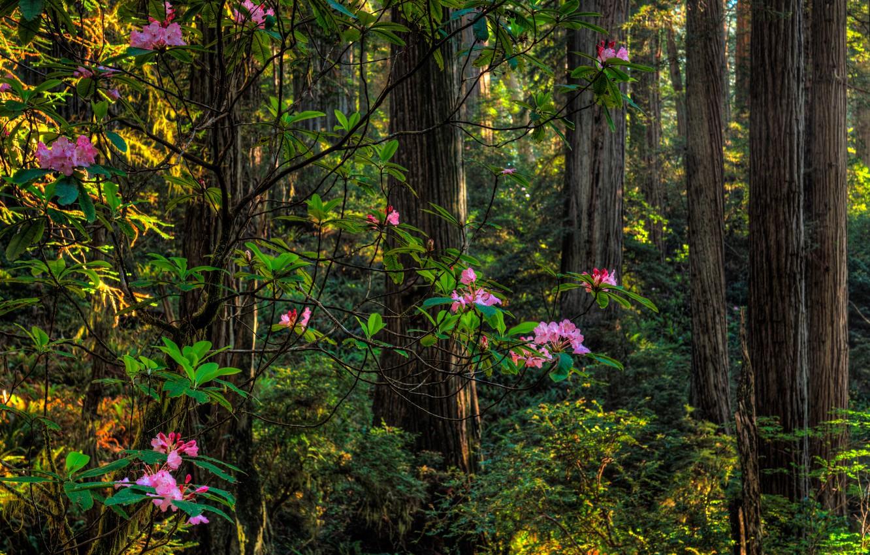 картинки с кустами в лесу ванги