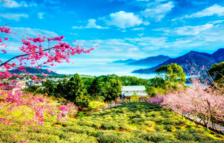 Обои настроение, Фонарик, лестница, цветы, Облака, цветущее деревце, рисунок, картинка, акварель, Весна. Разное foto 17